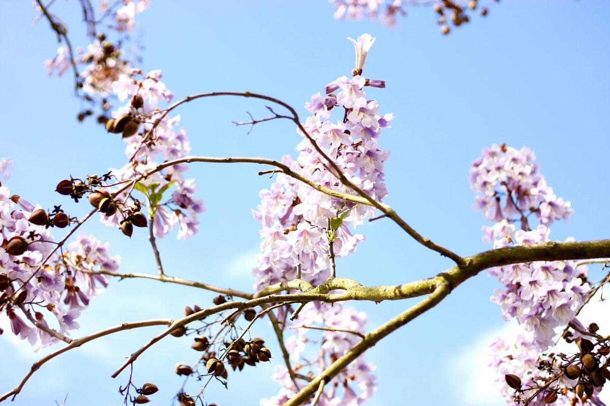 roombeek, lente, voorjaar, bloesem, bloemen, enschede