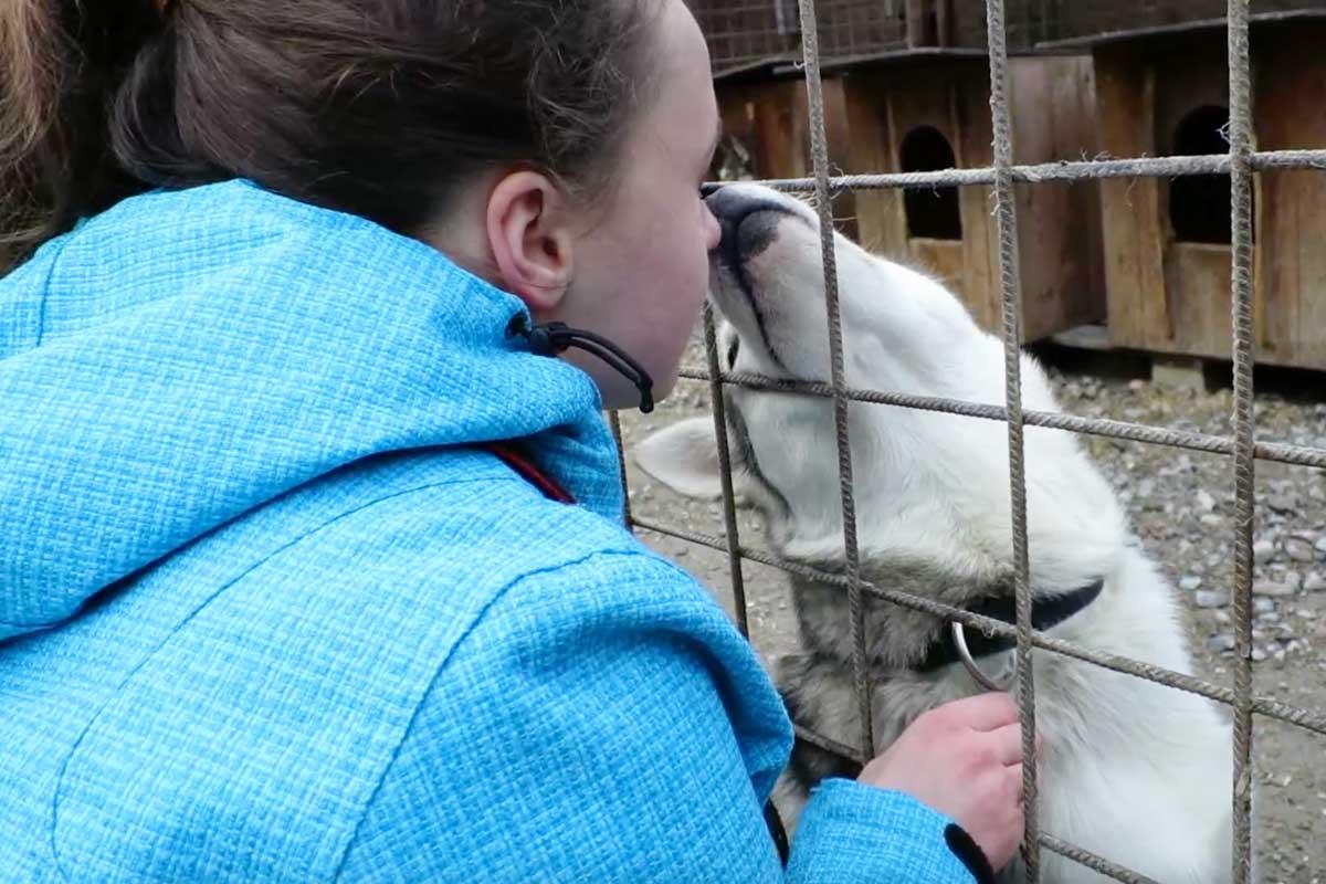 kussen met een husky, lief, lieve hond, husky park, rovaniemi, vakantie lapland, fins lapland
