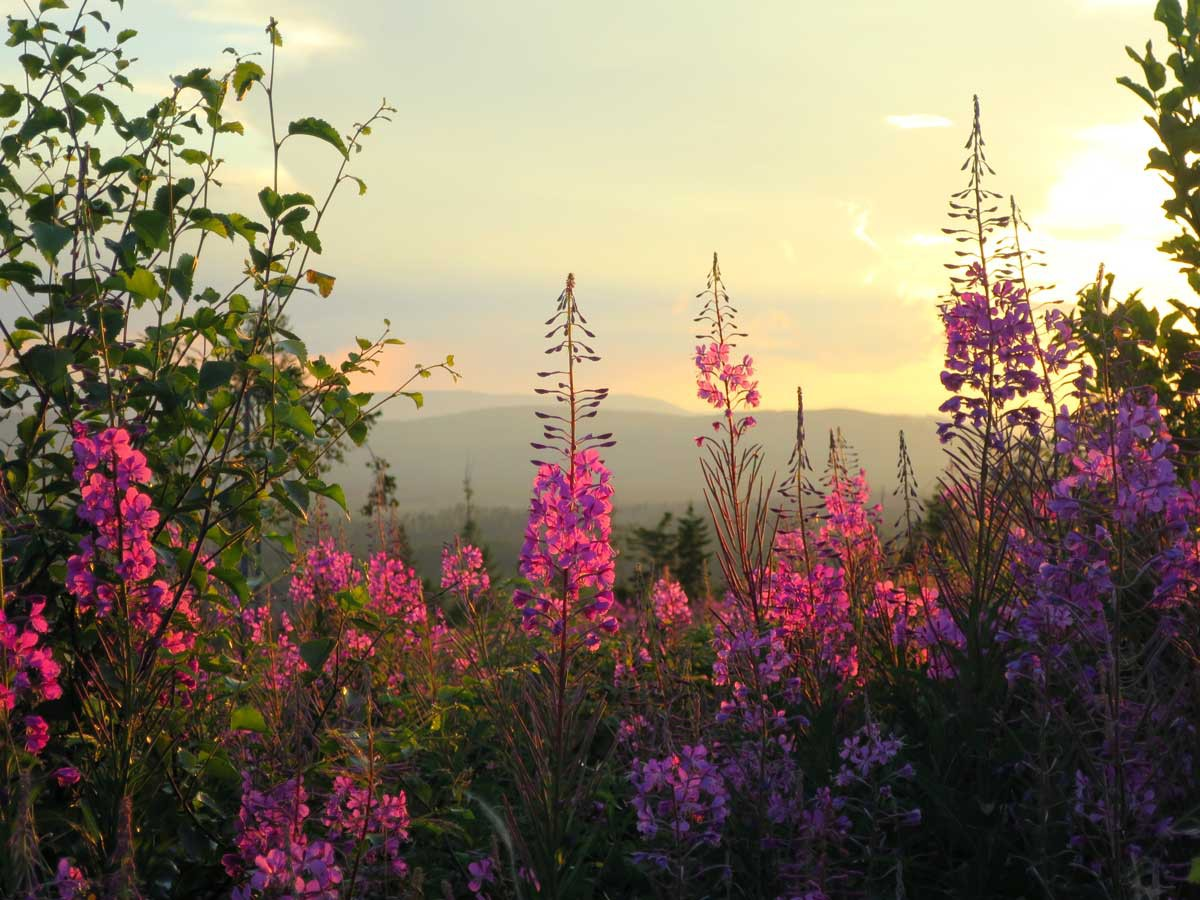 uitzicht zweden, härjedalen, mooi, liefde voor de zomer