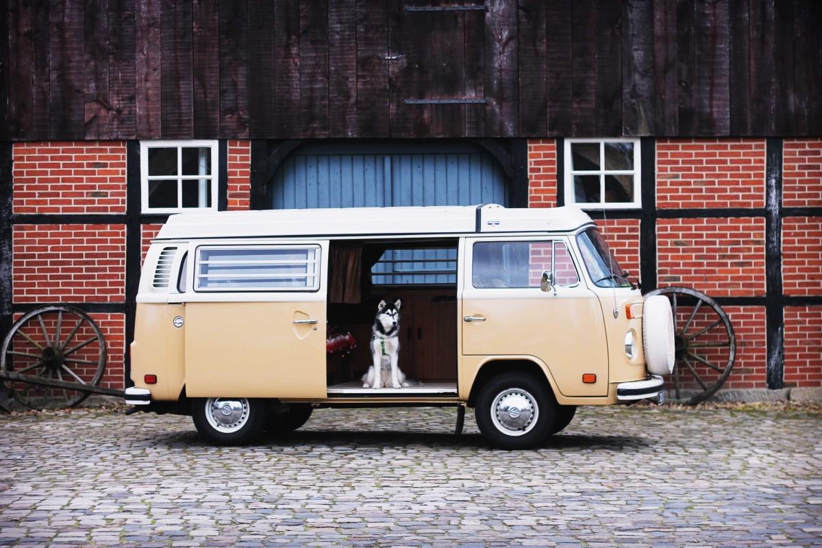 mr sandman de volkswagenbus, husky in een volkswagenbusje